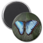 青いMorphoの蝶磁石 マグネット
