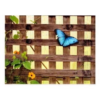 青いMorphoの蝶郵便はがき ポストカード