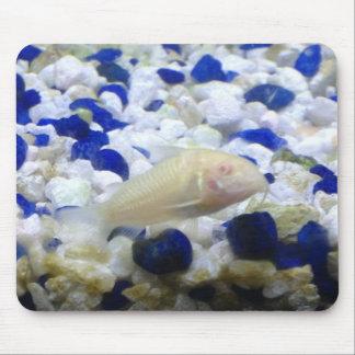 青および白い小石および白子猫の魚 マウスパッド