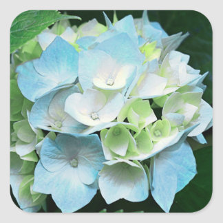 青および緑のアジサイの花のステッカー/シール スクエアシール