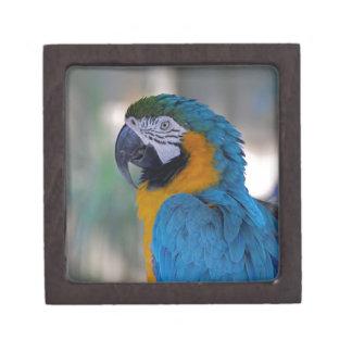 青および金ゴールドのコンゴウインコ ギフトボックス
