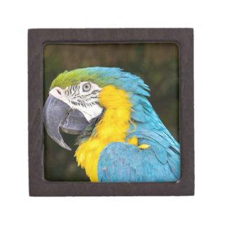 青および黄色いコンゴウインコのクローズアップ ギフトボックス
