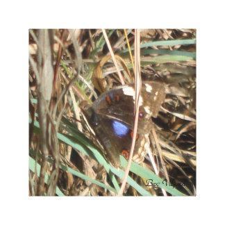 青によって斑点を付けられる蝶 キャンバスプリント