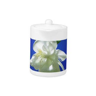 青の白いオダマキ(植物)