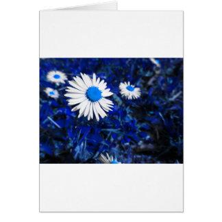 青の白いデイジーの花。 タスカニー、イタリア カード