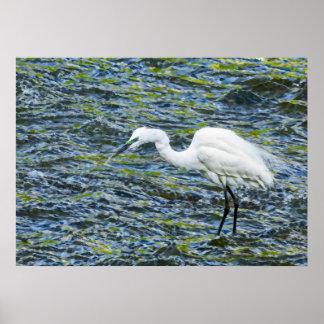 青及び緑湖のフラクタルの芸術のSnowy白鷺 ポスター