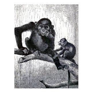 """""""青年および経験""""のヴィンテージ猿のイラストレーション ポストカード"""
