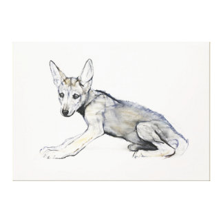 青年のアラビアのオオカミ子犬2009年 キャンバスプリント