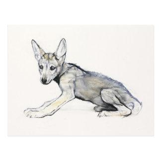 青年のアラビアのオオカミ子犬2009年 ポストカード