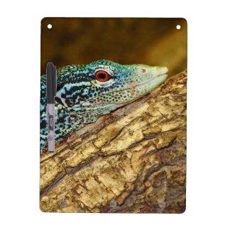 青斑点を付けられた木のモニターのVaranus Macraei ホワイトボード