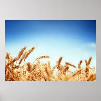 青空に対する小麦畑 ポスター