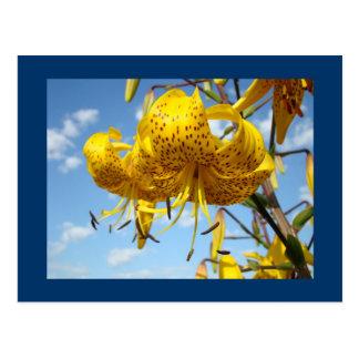 青空の郵便はがきの夏の黄色のオニユリ ポストカード