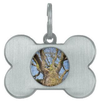 青空Iとのleaflessオークの木の下面図を暴露して下さい ペットネームタグ