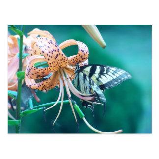 青緑色の蝶 ポストカード