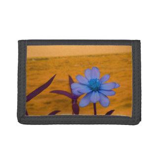 青花に対する紫色のデイジー