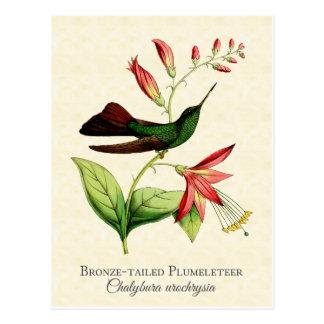 青銅によって後につかれるPlumeleteerのハチドリのヴィンテージの芸術 ポストカード