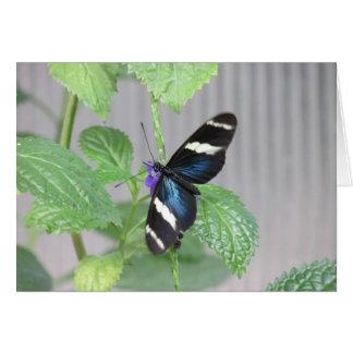 青、白黒蝶 カード
