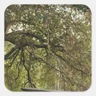 静かな心、日没の木の下の静かな時間 スクエアシール