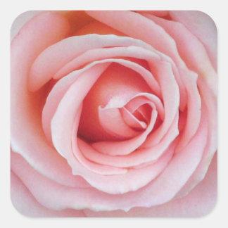静かにピンクのバラのステッカー スクエアシール