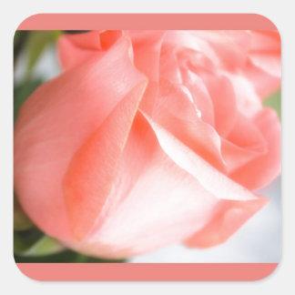 静かにピンクのバラのデザイン スクエアシール