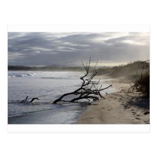 静けさの楽園のビーチのガラパゴス諸島 ポストカード