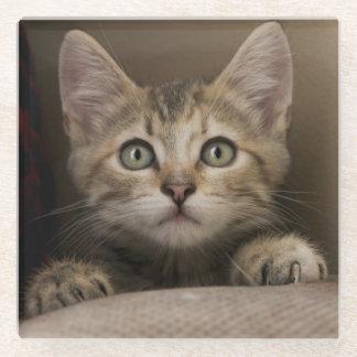 非常に甘い虎猫の子ネコ ガラスコースター