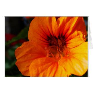 頭状花の見事なクローズアップ グリーティングカード