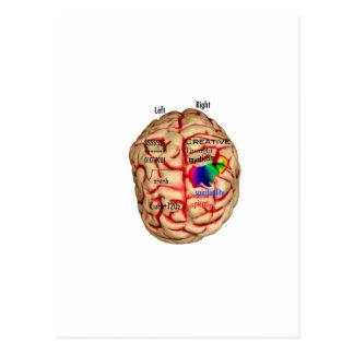 頭脳の左右の側面 ポストカード