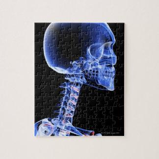 頭部および首の骨 ジグソーパズル