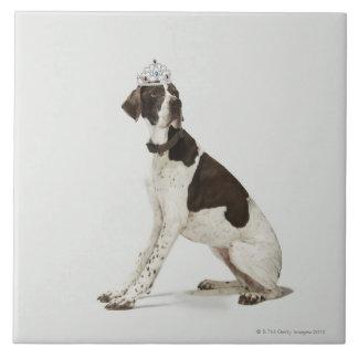 頭部にティアラと坐っている犬 タイル