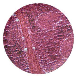 顕微鏡の下の膵臓の細胞 プレート