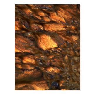 顕微鏡の下のAloin ポストカード