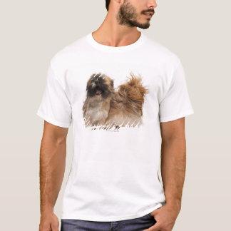 風の2シーズー(犬)Tzus Tシャツ