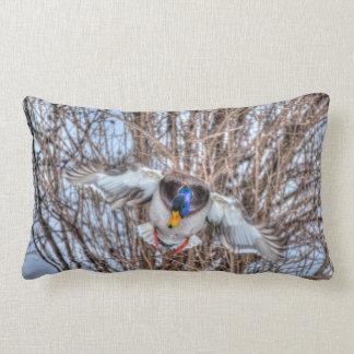 飛んでいるなマガモのアヒルのドレークの野性生物の写真 ランバークッション