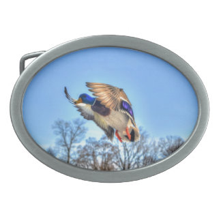 飛んでいるなマガモのアヒルのドレークの野性生物の写真 卵形バックル