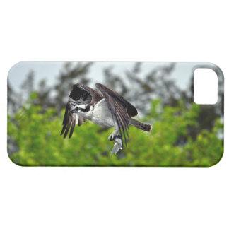 飛んでいるなミサゴ及び魚の郊外の野性生物の写真場面 iPhone SE/5/5s ケース
