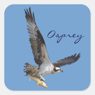 飛んでいるなミサゴ及び魚の野性生物の写真撮影 スクエアシール