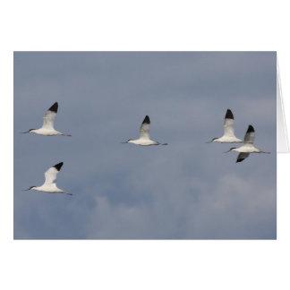 飛んでいるなAvocetの群の挨拶状 カード
