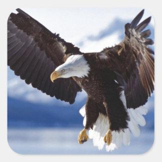 飛行中のアラスカのワシ スクエアシール