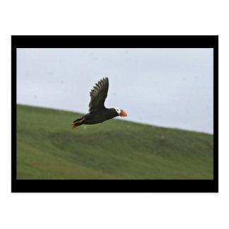 飛行中のエトピリカ、Aiktakの島 ポストカード