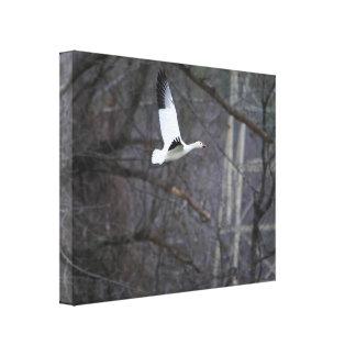 飛行中のハクガン キャンバスプリント