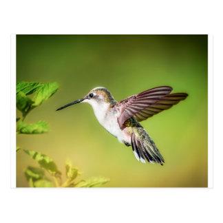 飛行中のハチドリ ポストカード