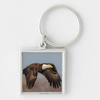 飛行中の白頭鷲 キーホルダー