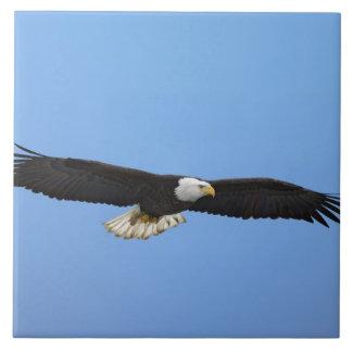 飛行中の白頭鷲、ホーマー、アラスカ、Haliaetus 正方形タイル大