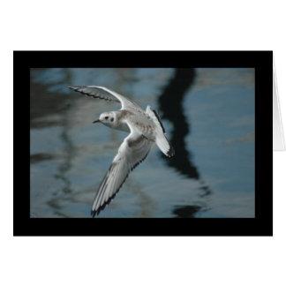 飛行中のBonaparteのカモメ カード