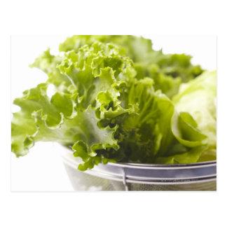 食糧、食糧および飲み物の野菜、レタス、 ポストカード