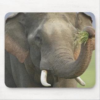 食糧、Corbettを表示しているインド/アジアゾウ マウスパッド