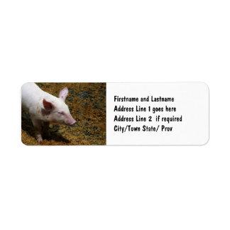 養豚家のためのベビーのコブタの写真 ラベル