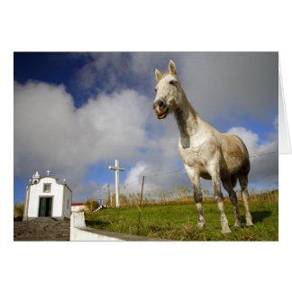 馬およびチャペル カード