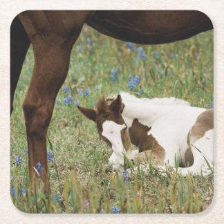 馬およびベビーの子馬のクローズアップ スクエアペーパーコースター